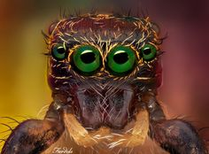 L'image du jour : Le visage de l'araignée