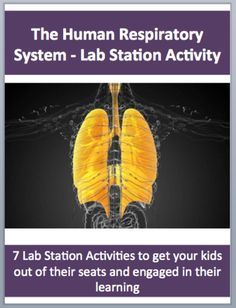 This fully editable Lab Station Activity on The Human Respiratory System and Photosynthesis is meant to get your students out of their seats and engaged in the content.