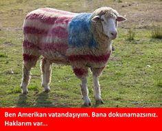 Ben Amerikan vatandaşıyım. Bana dokunamazsınız. Haklarım var... #karikatür #mizah #matrak #komik #espri #şaka #gırgır #komiksözler #caps #bayram #kurban #kurbanbayramı