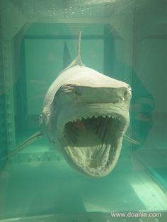 Damien Hirst's Shark