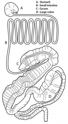 Anatomy of Horse 4 H Horse Pinterest Anatomy Horse and