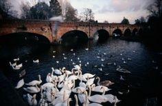 Beautiful bridge somewhere in the UK by ajct