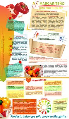 Infografía del ají margariteño