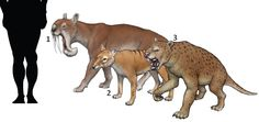 1. Thylacosmilus atrox 2. Thylacine cynocephalus 3. Thylacoleo carnifex