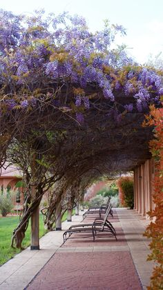 Wisteria.  Red Mountain Resort, St George Utah. Love this place!