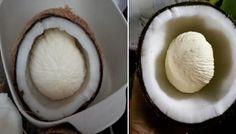 Benar2 Luar Biasa!! Dengan Kentos Kelapa Rabun DekatMigrainBatuk KeringHingga Stroke Bisa Sembuh ! Caranya... Simak Gan ! Kentos Kelapa atau dikenal pula dengan Tombong Kelapa adalah embrio dari tunas kelapa. Tahap perkecembahan pada buah kelapa yang akan mulai keluar tunasnya. Bentuk Kentos bulat dan terletak di dalam daging buah kelapa. Namun rasanya sungguh beda dari buah kelapa. Lebih getas dan crunchy. Tapi si kentos ini benar-benar aman dimakan. Bahkan bila dalam jumlah banyak enak…
