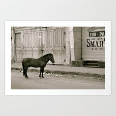 I dream that I saw a horse alone on the streets of India Art Print by over7seas - $14.56