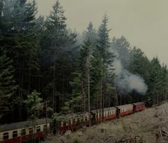 Train steaming through the forest.