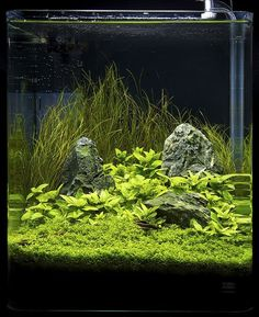 Nano contestants at the Art of the Planted Aquarium, Hannover 2011 Planted Aquarium, Aquarium Aquascape, Betta Aquarium, Aquarium Landscape, Home Aquarium, Nature Aquarium, Aquarium Ideas, Aquascaping, Aquarium Design