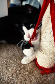 arrr! - Smok #cat