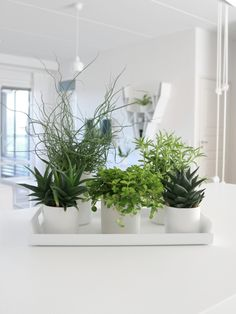 Loving those plants. Low Lights, Decor, Kids Ornaments, Video Wall, Indoor Plant Care, Indoor Plants Low Light, Indoor Plants Diy, Plant Shelves, Hanging Planters