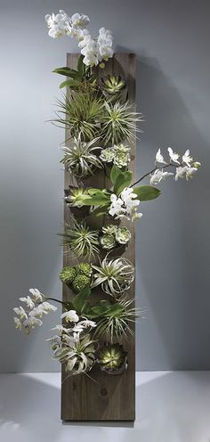 Tom Simmons AIFD This vertical garden is a fabulous gift for mom with dendrobium orchid plants, succulents and succulents and tillandsias. Design by Tom Simmons AIFD. Photography by Ron Derhacopian. Succulents Garden, Garden Plants, House Plants, Planting Flowers, Orchid Plants, Air Plants, Indoor Plants, Garden Art, Garden Design