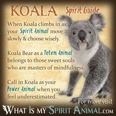 In-depth Koala Bear Symbolism & Meanings! Koala Bear as a Spirit, Totem, & Power Animal. Plus, Koala Bear in Celtic & Native American Symbols, & Dreams! Bear Totem, Spirit Animal Totem, Animal Spirit Guides, Your Spirit Animal, Animal Totems, Native American Zodiac Signs, Native American Animals, American Indians, Animal Meanings