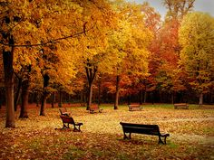 Google Image Result for http://fc07.deviantart.net/fs45/i/2009/092/0/0/Autumn_in_the_park_by_fahhhhh.jpg