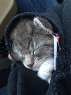 Kumo the tiny kitten