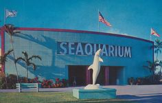 Seaquarium   Miami - Many happy visits here. Sharks, wax figures, smell of grilled burgers, sunfish, oh, just everything.