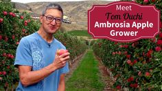 Meet Your BC Ambrosia Apple Growers - Tom Ouchi