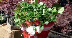 L'IDEA <br />Un giardino in un vaso