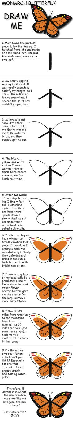 Draw a Monarch butterfly in 10 easy steps and learn fun facts about its life. ©…