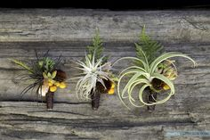Great style!  Using a mix of matching air plants, succulents, pods and berries but not exact copies of each other, each one is unique.