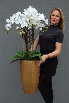 Orchid Plant Care, Orchid Plants, Orchids, Orchid Flower Arrangements, Office Plants, Tall Vases, Flower Decorations, Lemon Cypress, Wedding Flowers