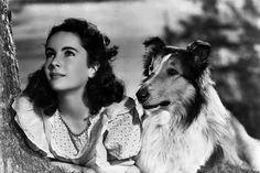 Yoing Elizabeth Taylor with 'Lassie'.
