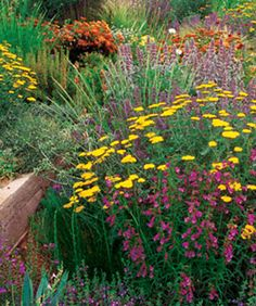 List of fast filling perennials.  Choose performers, not prima donnas. Though you may have to forgo some of your favorites, choose plants that will have an impact from day one instead of needing a few growing seasons to put on a show.