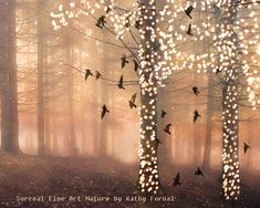 Nature Photography, Surreal Sparkling Twinkling Fantasy Woodlands, Dreamy Trees and Birds, Autumn Nature Fine Art Photo 8 x 10 via Etsy .img0.etsystatic.com