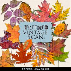 Scrapbooking TammyTags -- TT - Designer - Far Far Hill,  TT - Item - Element, TT - Theme - Autumn or Thanksgiving, TT - Thing - Trees or Leaves