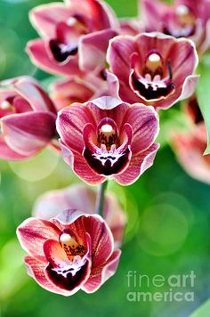 Lovely cascading miniature orchids