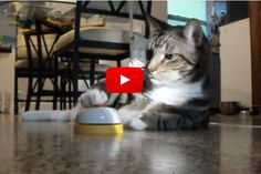 Cat Rings Bell For Service And Treat... - Love Meow