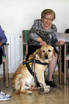 Este mes en Ciudadano Can queremos dar a conocer una funcionalidad de los perros de la que se obtienen beneficios para la salud de los seres humanos: los perros de terapia.    Desde hace muchísimos años se realizan terapias asistidas con animales en pacientes de muy diversas patologías (zooterapia).