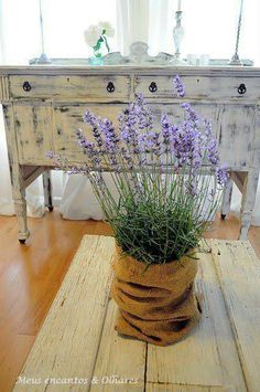 Very inexpensive centerpieces. Potted lavender wrapped in burlap. Maybe add a 1 in satin ribbon. Could get other flowers besides lavender. Maybe not burlap, but I like the idea! Lavender Cottage, Lavender Blue, Lavender Fields, Lavander, Potted Lavender, Lavender Flowers, Lavender Decor, Growing Lavender, Lavender Bouquet