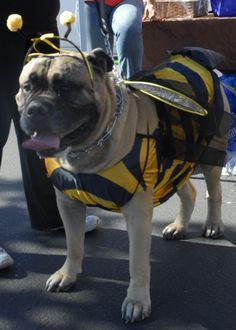 My bumble bee!