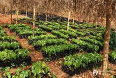 World Cocoa Foundation #WCF et #FeedtheFuture annoncent une initiative de 12 millions USD en faveur de la filière de #Cacao au #Cameroun en #CôtedIvoire au #Ghana et au #Nigeria https://fr.adalidda.net/posts/QiTaW8g2epCogpPaq/world-cocoa-foundation-et-feed-the-future-annoncent-une