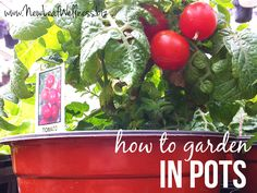 Gardening for beginners. How to grow vegetables, fruits, and herbs in pots on your deck or porch.
