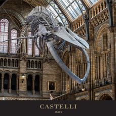 19th July - On this day: A new species of dinosaur is unveiled at the Natural History Museum, London 1983 (Source: Castelli 2018 corporate diary/2018 diaries feature facts every day)