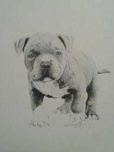 Baby pitbull, drawing by Reco Washington