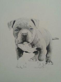 Baby pitbull, drawing by Reco Washington