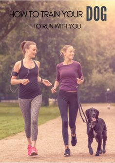 Dogs make great running partners. They're enthusiastic and motivated, and they act as a good reminder that your workout is waiting. The problem is that not all dogs are ready to run. No matter how energetic they seem at the house, if your dog isn't in running shape, you might end up walking him back home. How to Train Your Dog to Run With You http://www.active.com/running/articles/how-to-train-your-dog-to-run-with-you?cmp=17N-PB33---D3--1129