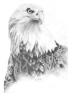 jpg Photo by calamaripaint Bird Pencil Drawing, Eagle Drawing, Bird Drawings, Animal Drawings, Pencil Drawings, Pencil Art, Pencil Sketches Of Love, American Flag Wallpaper, Adler Tattoo