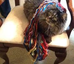Love me some ribbon!