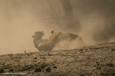2. Take Down, by Simon Cox. Chobe National Park, Botswana.
