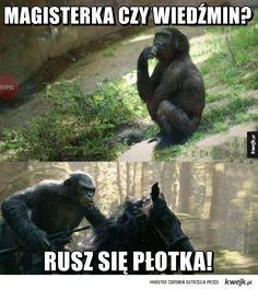Wybór może być tylko jeden Polish Memes, The Witcher, Creepypasta, Hypebeast, Fun Facts, Haha, Nerd, Geek Stuff, Jokes