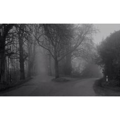 My brother Adam's atmospheric shot of countryside near Tatsfield in Kent. Superb gothic horror feel to it.