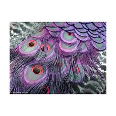 feathers | Tumblr ❤ liked on Polyvore featuring backgrounds, pictures, photos, purple and peacock