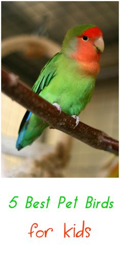 5 Best Pet Birds For Kids ... see more at PetsLady.com ... The FUN site for Animal Lovers