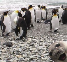 Why did these animals ruin these pictures?   42 Unsolved Mysteries We'll Never Know The Answers To