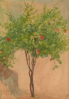 Walter Crane - A Pomegranate Tree. Verso: Fragmentary sketches of two figures -The Morgan Library & Museum Walter Crane, Tree Illustration, Botanical Illustration, Illustrations, Pomegranate Art, Tree Sketches, Fruit Art, Woodland Creatures, Fauna