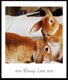 My bunnies!